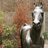 Nous sommes fières de vous présenter un nouveau né 🐎 déjà prêt à partir rejoindre son près 🌳🌱🐴 Dimensions : l*L*h : 220*60*190 cm Finition : bicolor craquelé argent et noir Œuvre unique 👌  #madeinfrance🇫🇷 #handmade🎨🖌 #oeuvredart #horse #cheval #passionequestre #zoo #pmu #artist #artisanatfrancais #oeuvredart #statuepersonnalisée #statues #exposition #decorationinterieur #jardin #decorationexterieur ❤️
